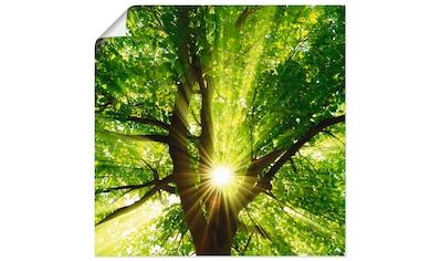 Artland Wandbild »Sonne strahlt explosiv durch den Baum«, Bäume, (1 St.), in vielen... kaufen