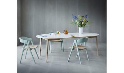hammel Esstisch »Single« (Packung, 8 Stück) kaufen