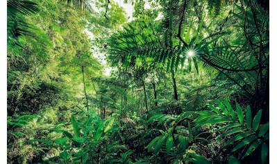 Komar Vliestapete »Hefele Into the Jungle«, naturalistisch kaufen