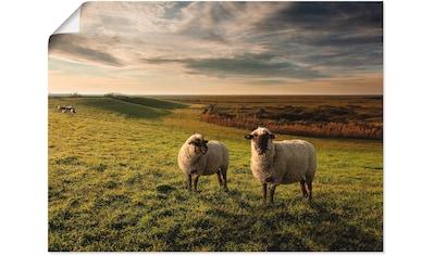 Artland Wandbild »Die Deichgrafen...«, Haustiere, (1 St.), in vielen Größen & Produktarten -Leinwandbild, Poster, Wandaufkleber / Wandtattoo auch für Badezimmer geeignet kaufen