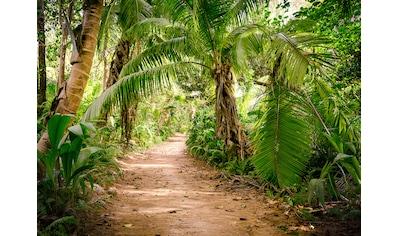 LIVINGWALLS Fototapete »Designwalls Palm Walk«, Premium Vlies kaufen