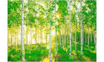 Komar Fototapete »Sunday«, bedruckt-Wald-Meer, ausgezeichnet lichtbeständig kaufen
