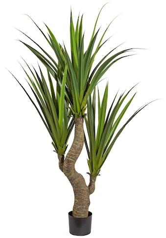 Creativ green Kunstpflanze »Agave« (1 Stück) kaufen