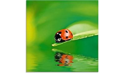 Artland Glasbild »Marienkäfer auf einem Blatt«, Insekten, (1 St.) kaufen