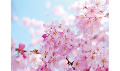 PAPERMOON Fototapete »Cherry Blossom«, Vlies, in verschiedenen Größen kaufen