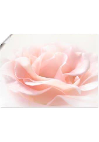 Artland Wandbild »Rose I« kaufen
