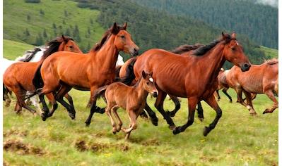 Papermoon Fototapete »Wild Horses« kaufen