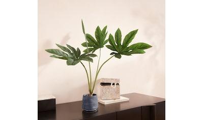 Guido Maria Kretschmer Home&Living Kunstpflanze »Encadra«, im Zementtopf kaufen