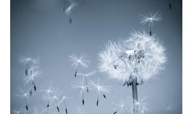PAPERMOON Fototapete »Dandelion in the Wind«, Vlies, in verschiedenen Größen kaufen