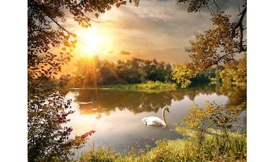 Papermoon Fototapete »Schwan am Teich«, Vliestapete, hochwertiger Digitaldruck kaufen