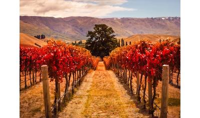 Papermoon Fototapete »Autumn Vineyard« kaufen