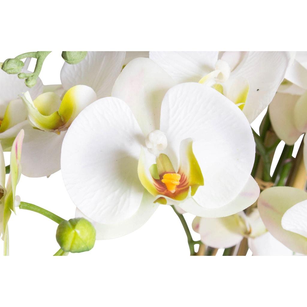 Botanic-Haus Kunstorchidee »Orchidee Bora«