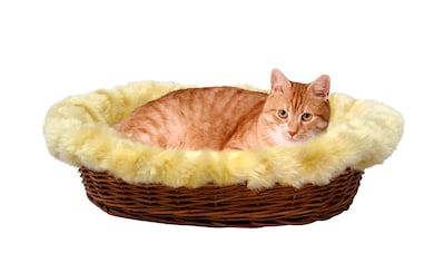 SILVIO design Tierkorb »Rattan« kaufen