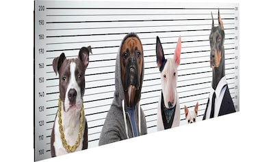 Home affaire Deco - Panel »Most Wanted Dogs« kaufen