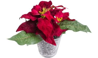 Botanic-Haus Künstliche Zimmerpflanze »Poinsettien-Arrangement« kaufen