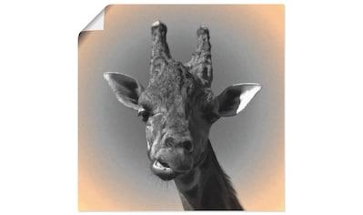 Artland Wandbild »Giraffen Kontakt«, Wildtiere, (1 St.), in vielen Größen &... kaufen