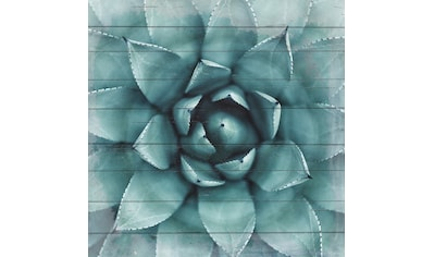 queence Holzbild »Agave«, 40x40 cm kaufen