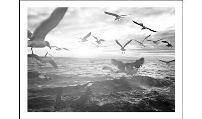 Spiegelprofi GmbH Bild »Vögel«, mit Rahmen kaufen