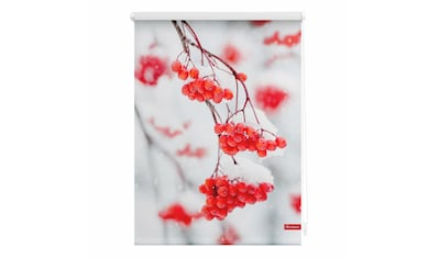 LICHTBLICK Seitenzugrollo »Klemmfix Motiv Vogelbeeren«, Lichtschutz, ohne Bohren, freihängend, bedruckt kaufen