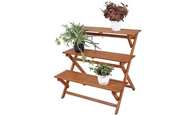eukalyptus pflanzen kaufen online kaufen baur. Black Bedroom Furniture Sets. Home Design Ideas