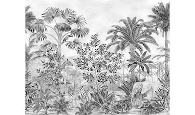 Komar Fototapete »Jungle Evolution«, bedruckt-Comic-Retro-mehrfarbig, BxH: 350x280 cm kaufen