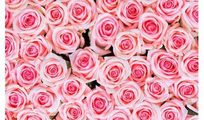 living walls Fototapete »rosa Rosen«, 400 x 250 cm kaufen