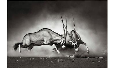 Vliestapete »Das Duell«, Wall - Art kaufen