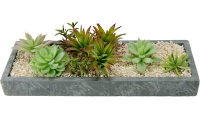 I.GE.A. Kunstpflanze »Succulenten in Schale« kaufen