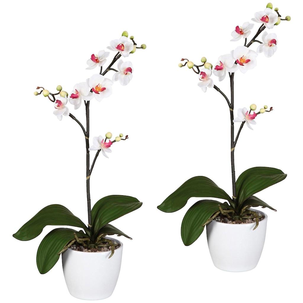 Creativ green Kunstpflanze »Orchidee Phalaenopsis«, im Keramiktopf