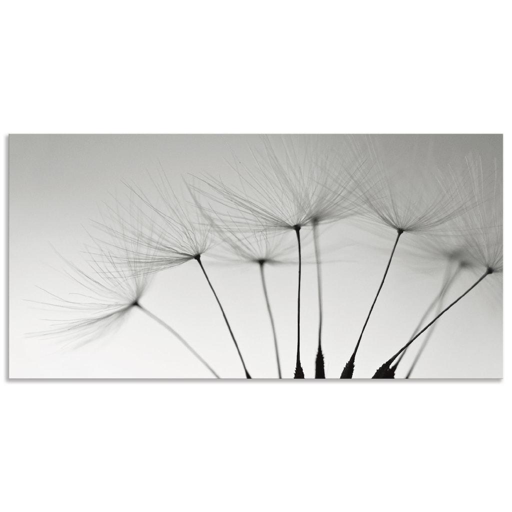Artland Küchenrückwand »Pusteblumen-Samen I«