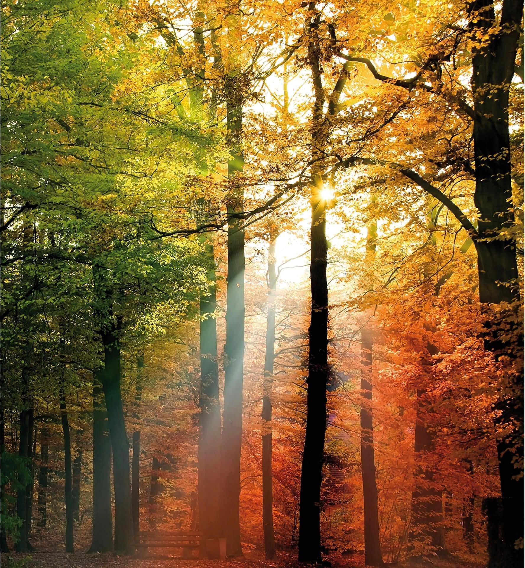 Fototapete Goldener Herbst 240/260 cm Wohnen/Wohntextilien/Tapeten/Fototapeten/Fototapeten Natur