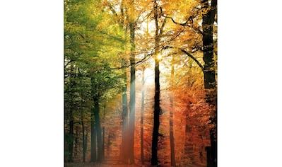 Vliestapete »Goldener Herbst«, Wall - Art kaufen