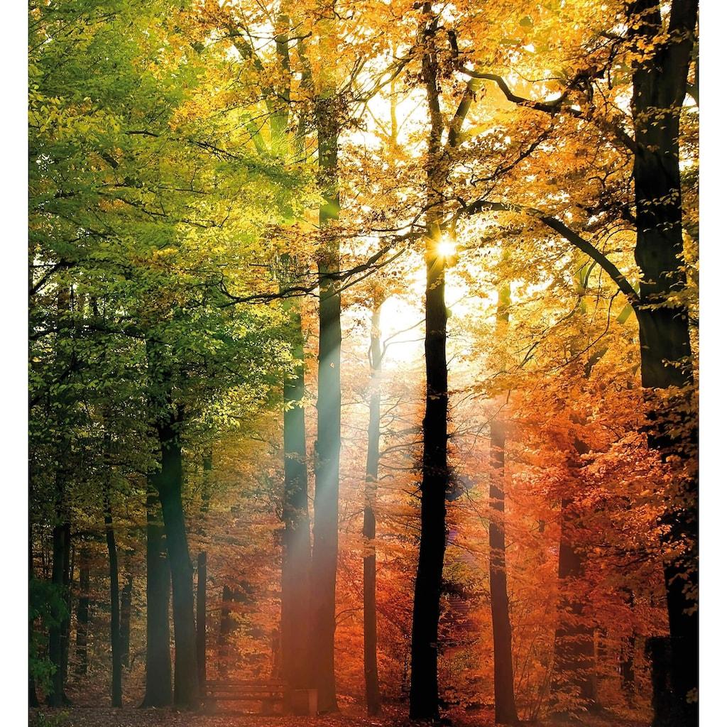 Wall-Art Vliestapete »Goldener Herbst«