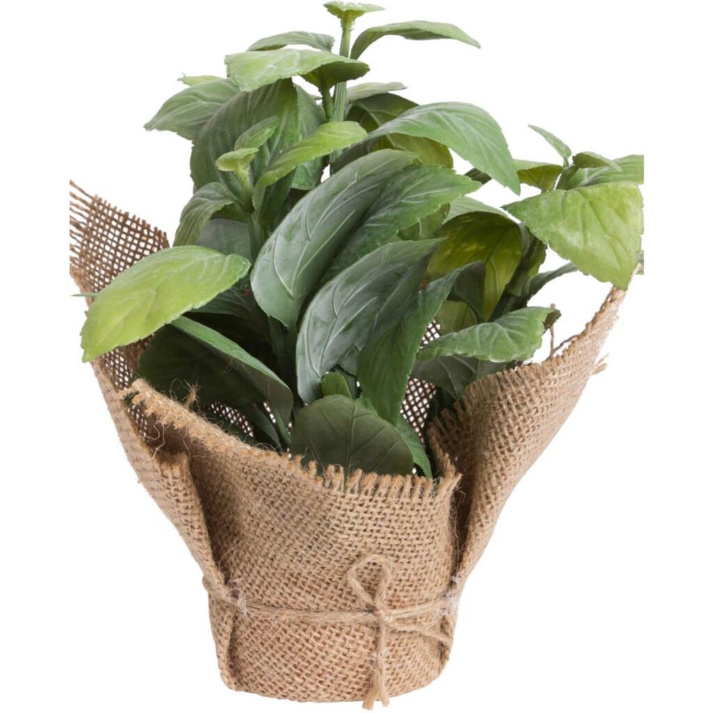 Botanic-Haus Künstliche Zimmerpflanze »Kräuter«