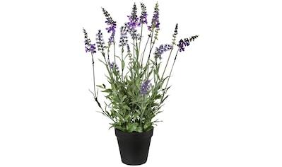 Creativ green Kunstpflanze »Lavendel«, im Topf kaufen