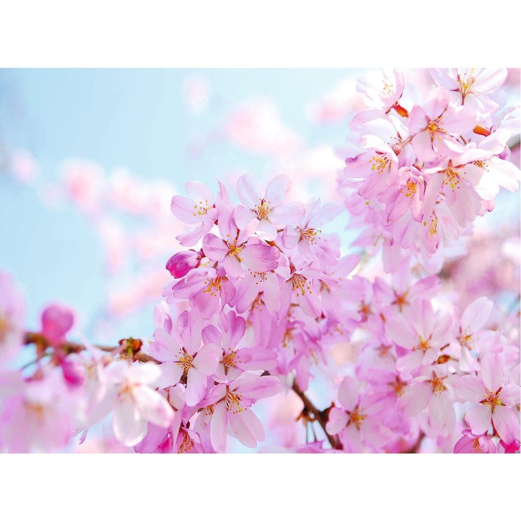 Papermoon Fototapete »Cherry Blossom«