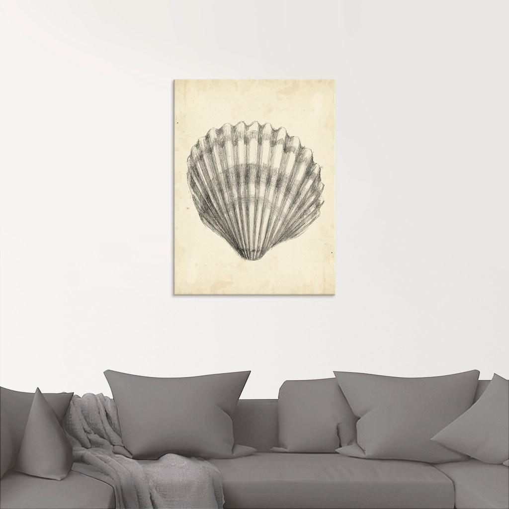 Artland Glasbild »Antike Muschel Lehre III«, Wassertiere, (1 St.)