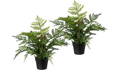 Creativ green Künstliche Zimmerpflanze kaufen