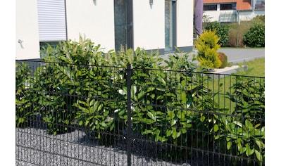 HOME DELUXE Doppelstabmattenzaun 80 cm hoch, 10 Matten für 10 m Zaun, mit 6 Pfosten kaufen