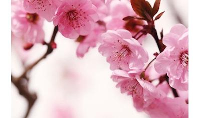 PAPERMOON Fototapete »Peach Blossom«, Vlies, in verschiedenen Größen kaufen