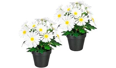 my home Künstliche Zimmerpflanze »Khloe«, 2er Set kaufen