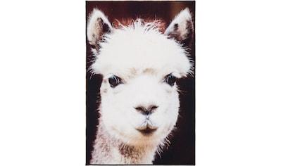 Teppich, »Lama«, Andiamo, rechteckig, Höhe 5 mm, maschinell getuftet kaufen
