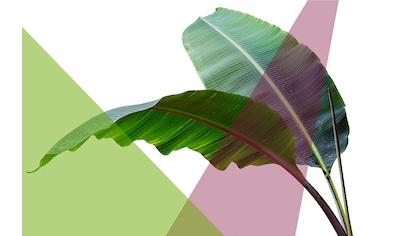 queence Acrylglasbild »Blätter« kaufen