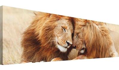Wandbild »Löwenliebe« kaufen