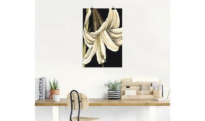 Artland Wandbild »Grafiklilie IV«, Blumen, (1 St.), in vielen Größen & Produktarten - Alubild / Outdoorbild für den Außenbereich, Leinwandbild, Poster, Wandaufkleber / Wandtattoo auch für Badezimmer geeignet kaufen