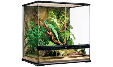 Exo Terra Terrarium, BxTxH: 60x45x60 cm kaufen