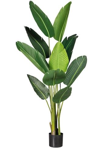 Creativ green Kunstpflanze »Strelitzie« (1 Stück) kaufen