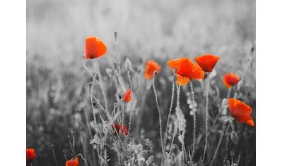 Papermoon Fototapete »Red Poppy Flowers« kaufen