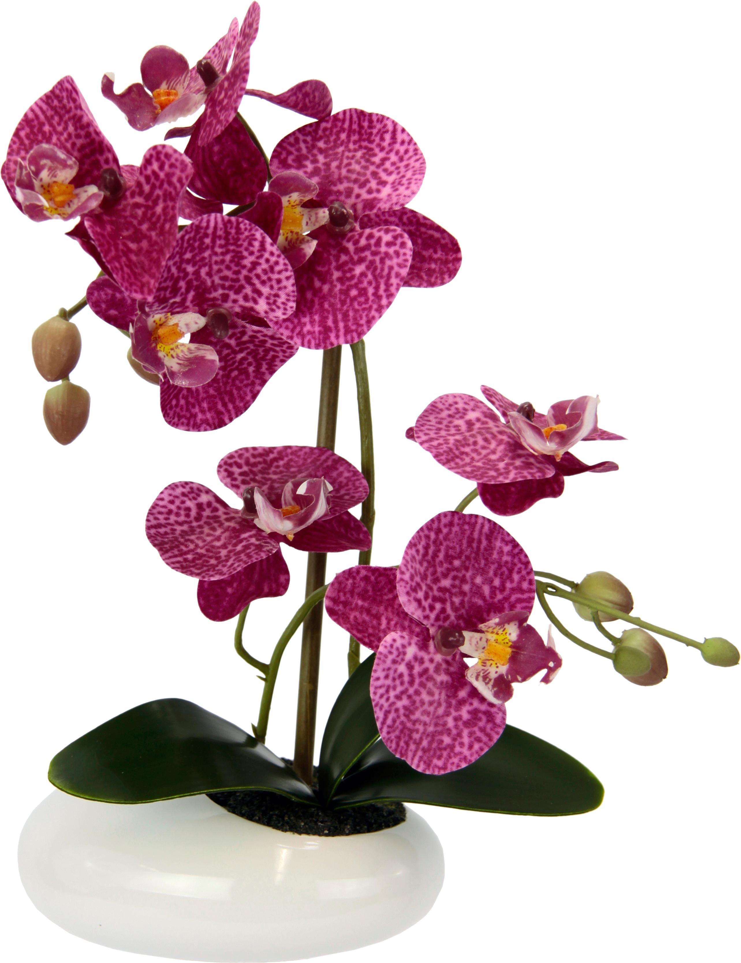 Kunstorchidee Phalaenopsis in Schale   Dekoration > Dekopflanzen > Kunstpflanzen   Rosa