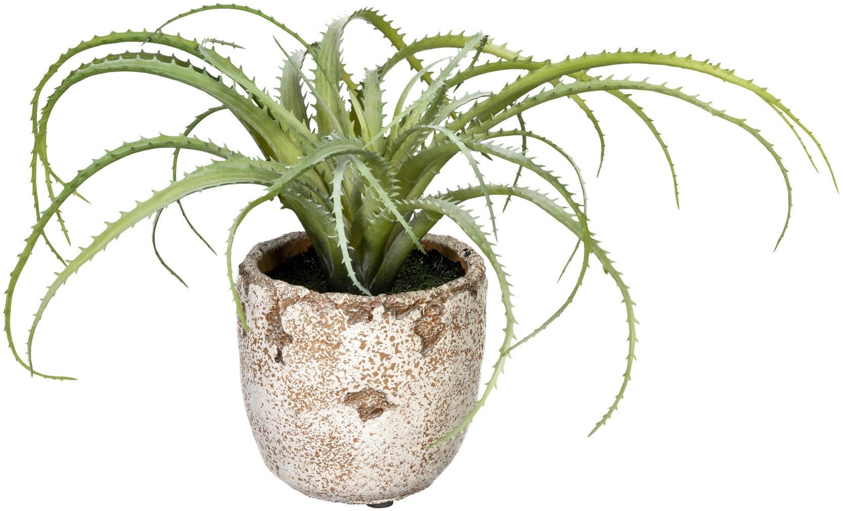 Creativ green Künstliche Zimmerpflanze Aloe arborescens, im Zementtopf grün Zimmerpflanzen Kunstpflanzen Wohnaccessoires